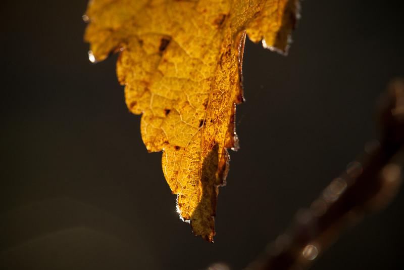 Melting frost.