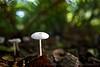 Forest Mushroom Macro