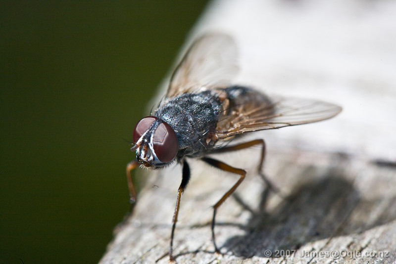 Taken with a Canon 100mm f2.8 macro atop a full set of extension tubes. Stopped down to f10