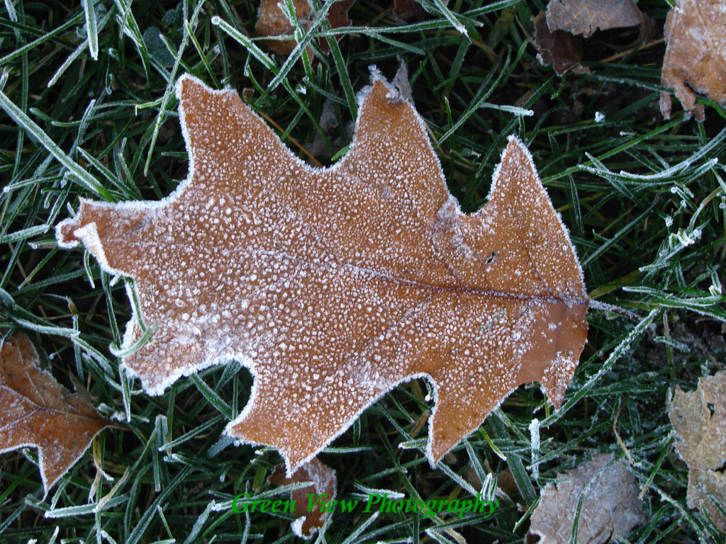 Decorated with Frost
