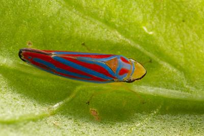 Under a Basil Leaf