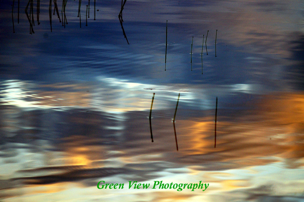 Evening reflection in the reeds