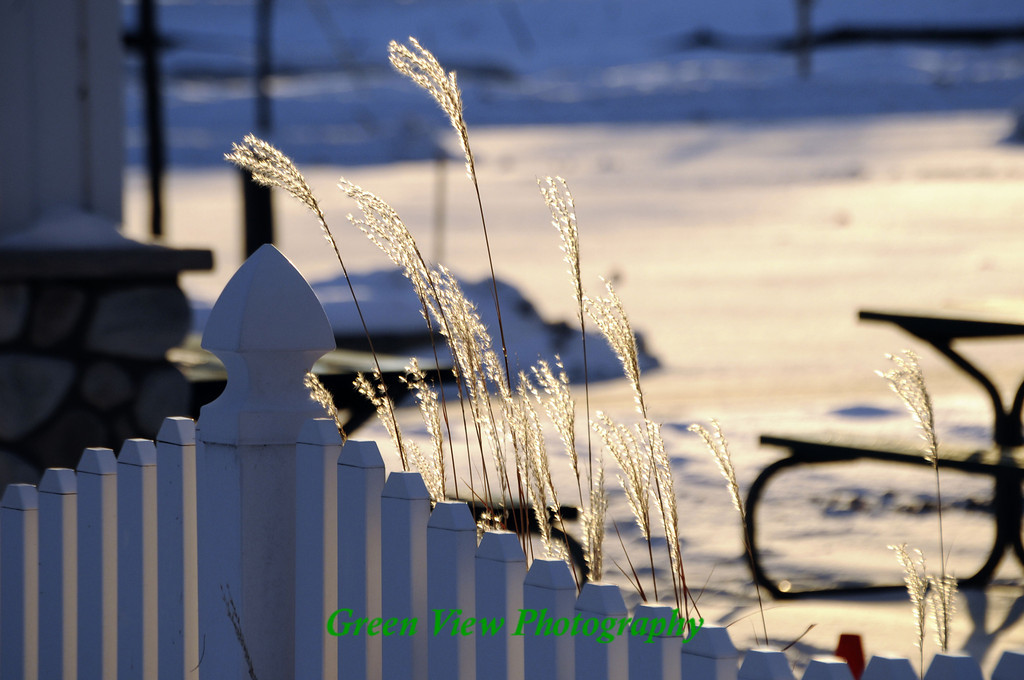 Winter Tall Grass
