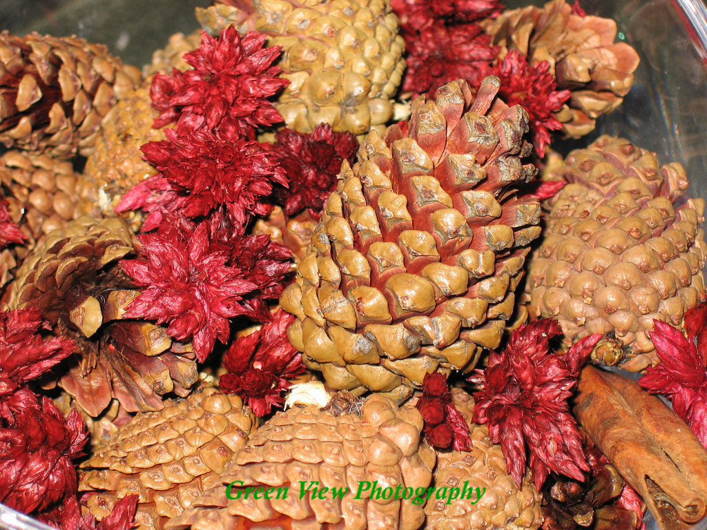 Bowl of Pine cones