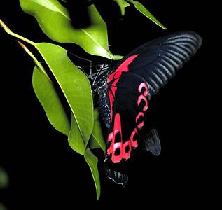 _DSC4888Magic Wings