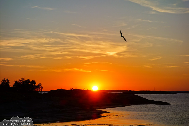 Seagull in the glowing sunset. Stockholm Archipelago.