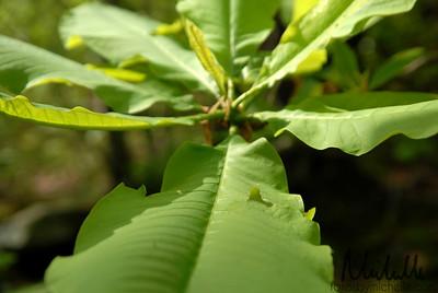 Magnolia Falls005