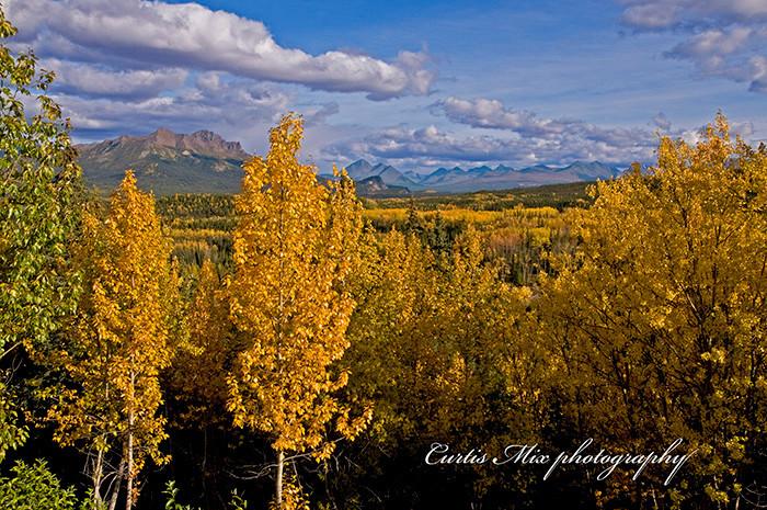 Denali N.P. during the peak of fall colors.