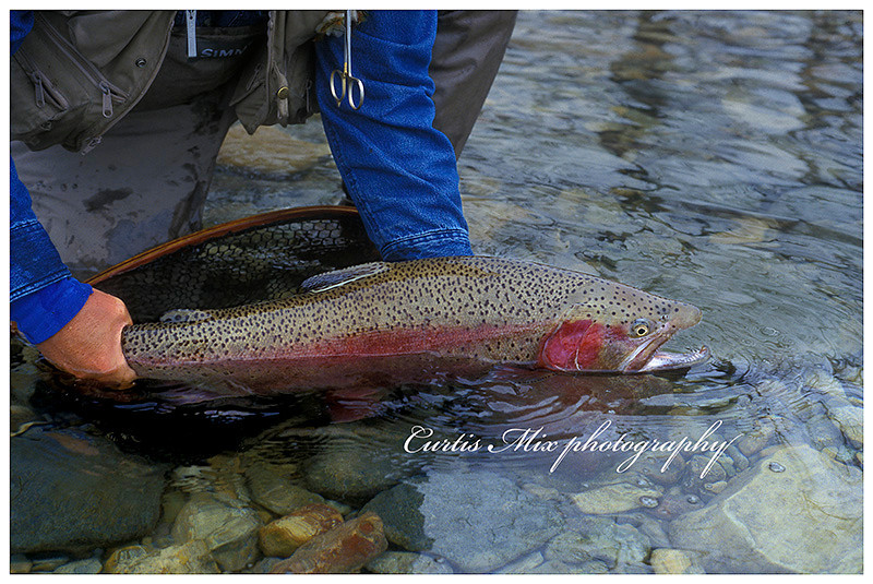 Chasing rainbows. A metaphor for pursuing your dreams. Whether its great images or huge rainbow trout.