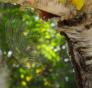 Spider Web Action