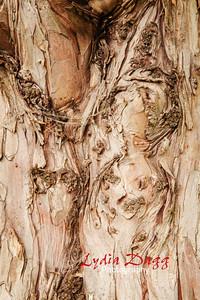 Tree Bark, #3317