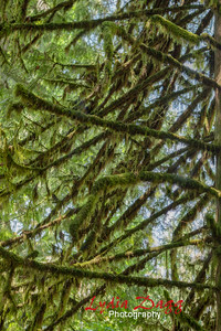 Canopy of Moss, #6472