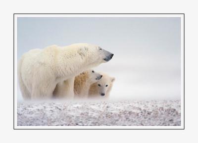 mammals_Momwithcubs-2