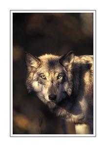 mammals_A61