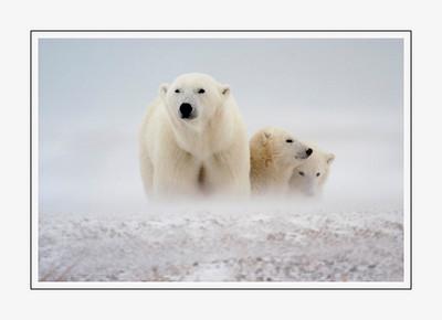 mammals_Momwithcubs-3
