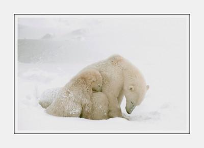 mammals_PolarStorm
