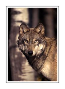 mammals_A60