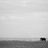 African Elephant (Loxodonta africana)<br /> Amboseli National Park, Kenya<br /> IUCN Status: Vulnerable (trend: increasing)