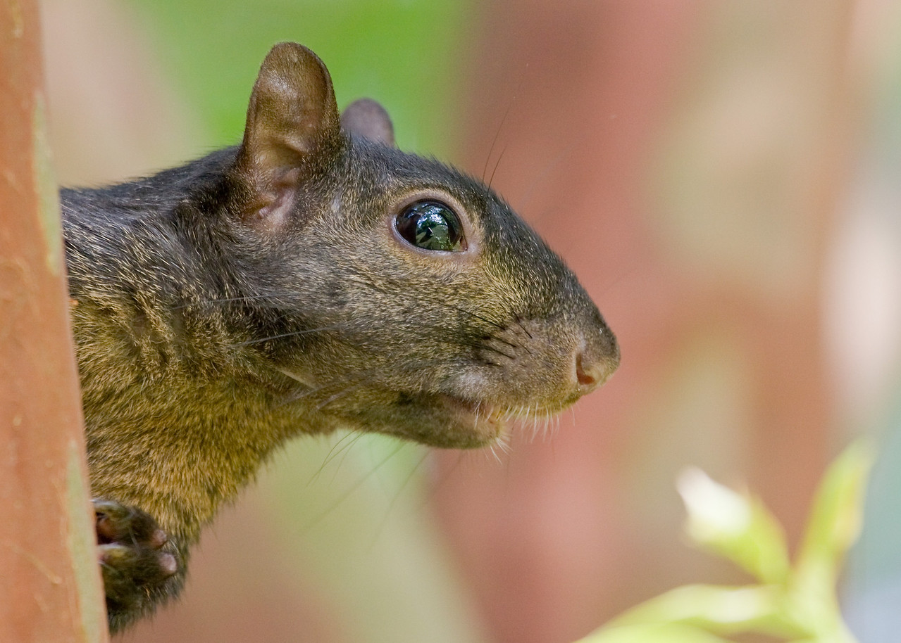 Sniff Sniff ... Do I smell peanuts?