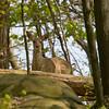 Greenbrook Reserve, NJ - May 2008