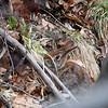 Greenbrook Reserve, NJ - April 2008