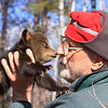 Image of Lily's cub Jason and Dr. Lynn Rogers taken April 2011. Ursus americanus (American Black Bear).