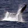 6 28 06 Moreton Island Whale Trip Brisbane Australia 080