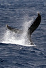 6 28 06 Moreton Island Whale Trip Brisbane Australia 081