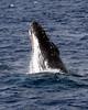 6 28 06 Moreton Island Whale Trip Brisbane Australia 029