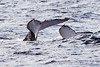 6 28 06 Moreton Island Whale Trip Brisbane Australia 097