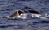 6 28 06 Moreton Island Whale Trip Brisbane Australia 064