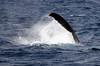6 28 06 Moreton Island Whale Trip Brisbane Australia 047