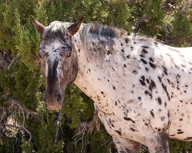 2017-09-18  Wild Horse, Utajh