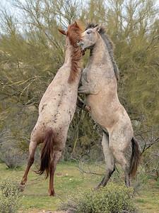 2019-02-17  Wild Horses
