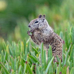 2020-03-13  Rock Squirrel
