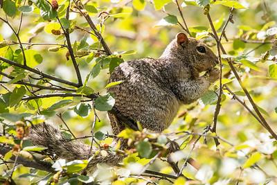 2017-09-16  Rock Squirrel