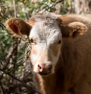 2017-11-20  Free Range Cows