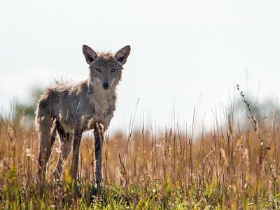 2017-09-16  Coyote