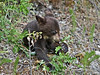 Black Bear Cub,<br /> Near Medicine Lake,<br /> Jasper National Park, Alberta, Canada