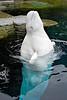 Beluga Whale,<br /> Aquarium, Vancouver, Canada