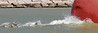 Baby Dolphin Bow Surfing with Adults,<br /> Jetty at Freeport, Texas