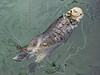 Sea Otter,<br /> Aquarium, Vancouver, Canada