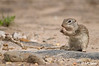 Squirrel_LAJ6325
