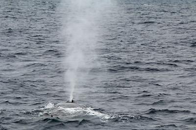2015-07-05 Whale