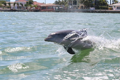 2015-05-28  Bottlenose Dolphin