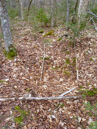 Black Bear bed, possibly a late-winter bed