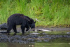 Black Bear Buffet