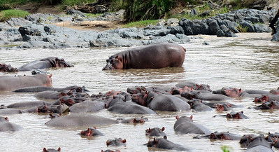 Late arrival to hippo pool; entering very carefully!