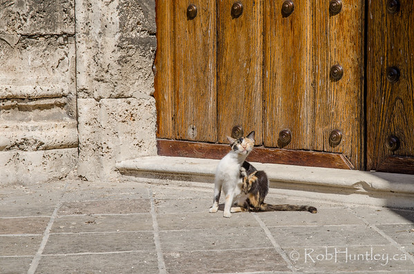 Street cat outside a solid wood door