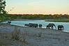 Evening on the Chobe River, Botswana